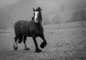 horse-beauty